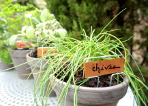 Chives-sage-and-other-potted-herbs-217x155