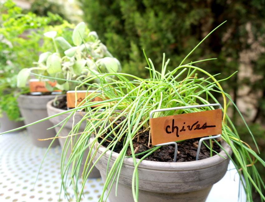 View In Gallery DIY Herb Garden