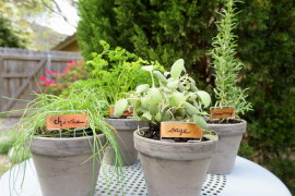 An Easy Tabletop DIY Herb Garden