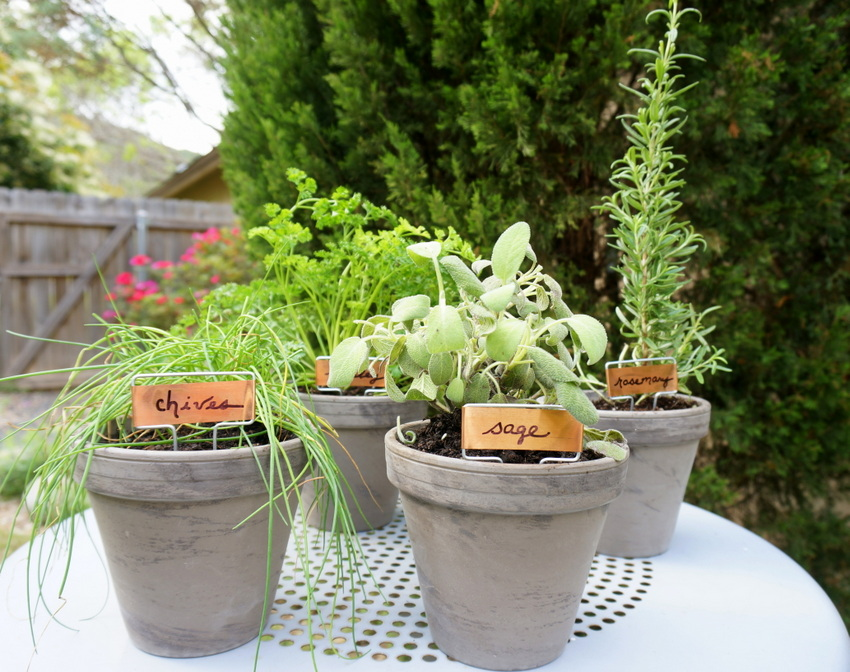 DIY potted herb garden An Easy Tabletop DIY Herb Garden