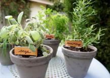 Easy tabletop herb garden