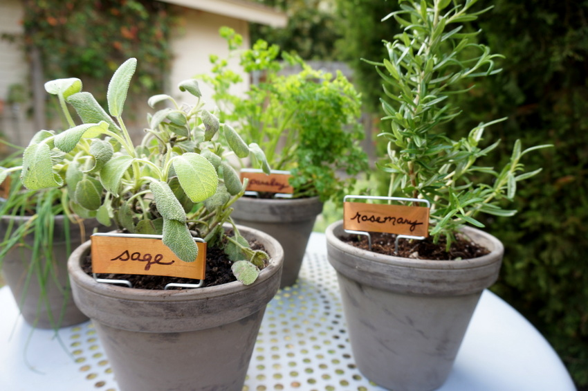 Easy tabletop herb garden
