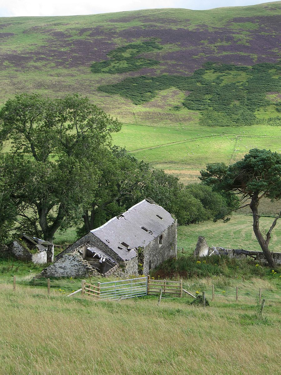 Natural landscape around the Mill Home overlooking the Scottish border