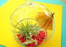 Neon tropical air plant terrarium