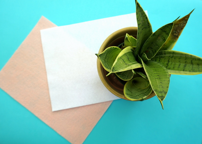 Plants are a perfect gift basket filler