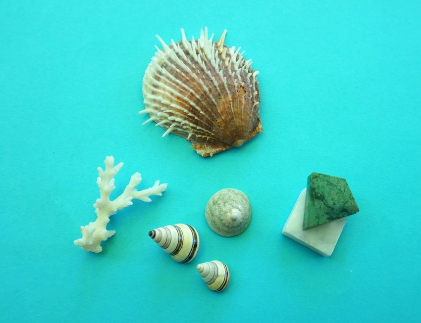 Seashells and marble