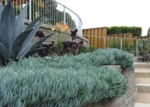 Succulents-and-blue-agave-in-a-garden-by-Shades-of-Green-217x155