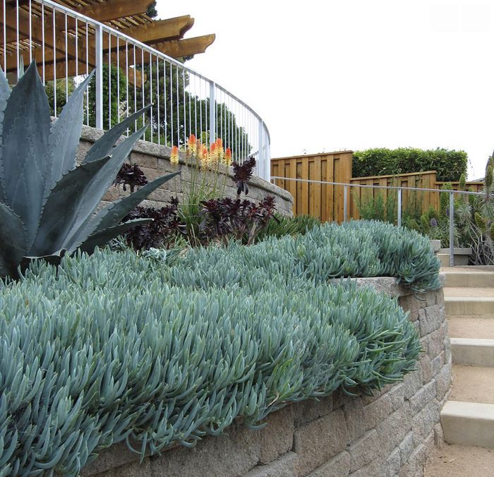 Succulents and blue agave in a garden by Shades of Green
