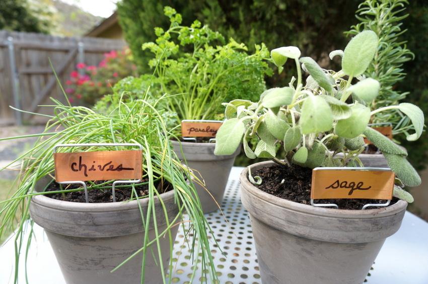 Tabletop herb garden