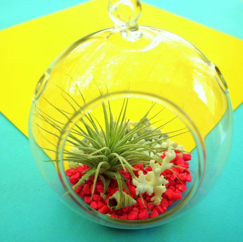 Tropical air plant terrarium DIY project