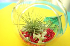 A DIY Tropical Air Plant Terrarium