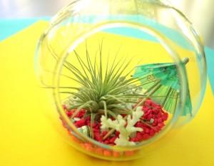 Tropical terrarium possibilities
