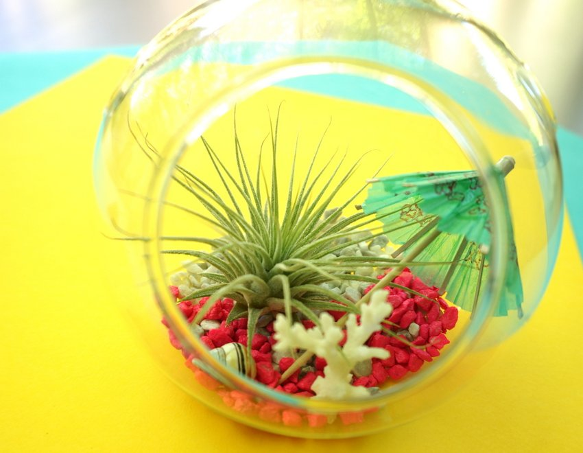 Tropical terrarium possibilities A DIY Tropical Air Plant Terrarium