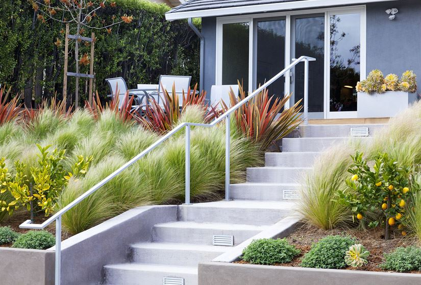 view in gallery variety of grasses contained by a concrete retaining wall