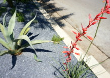Vibrant red yucca blossoms