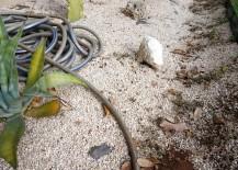 A-gravel-garden-in-need-of-help-217x155