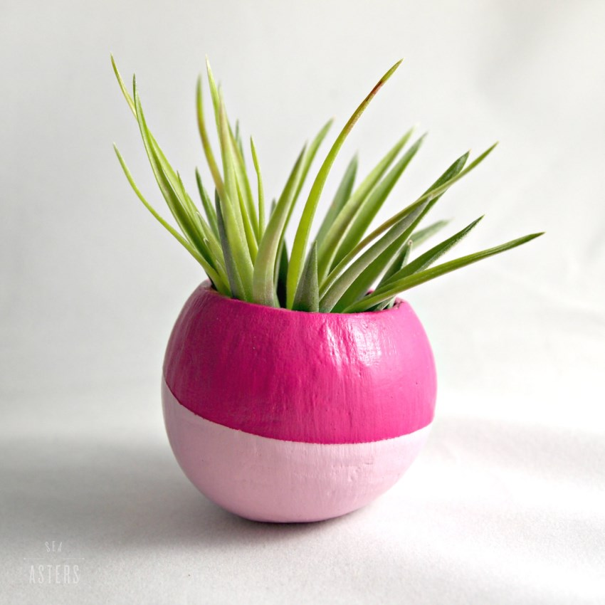 Air plant pod from Sea and Asters