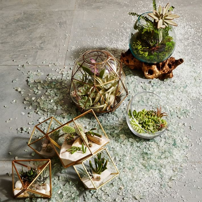 Assortment of terrariums from West Elm