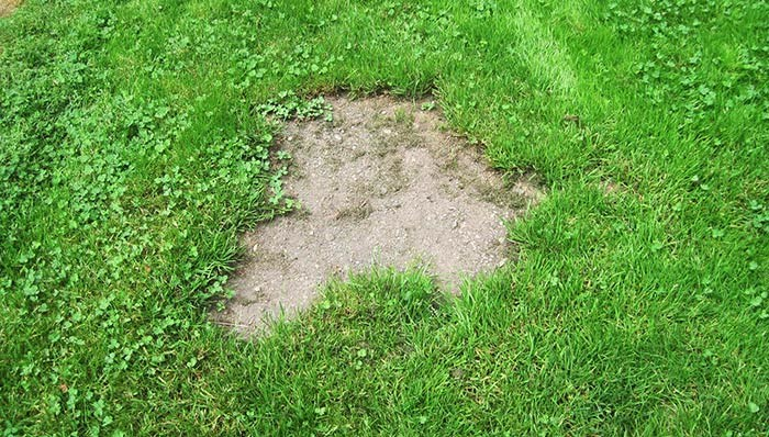 Bare spots are a common lawn issue