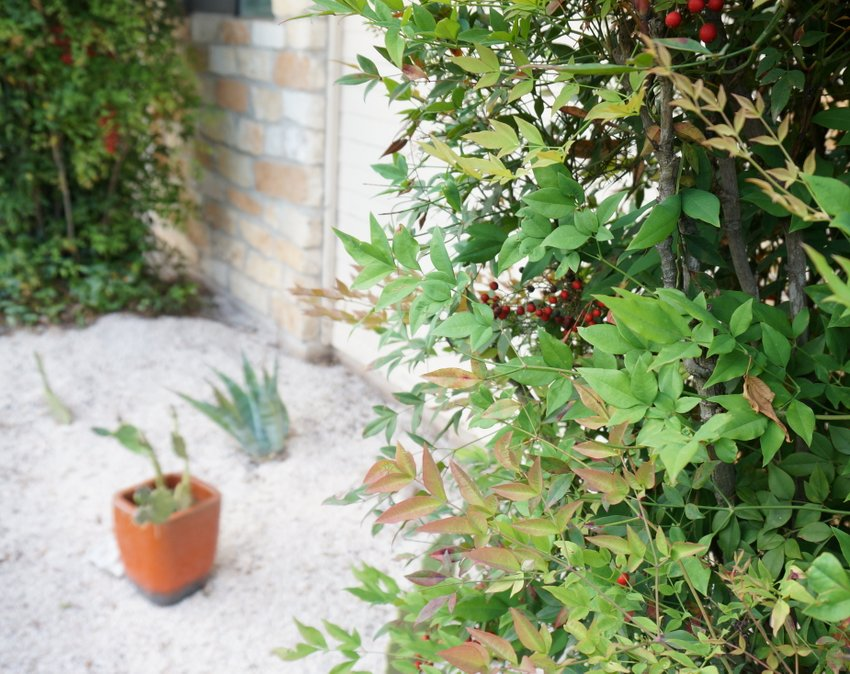 Consider the placement of plants in your gravel garden