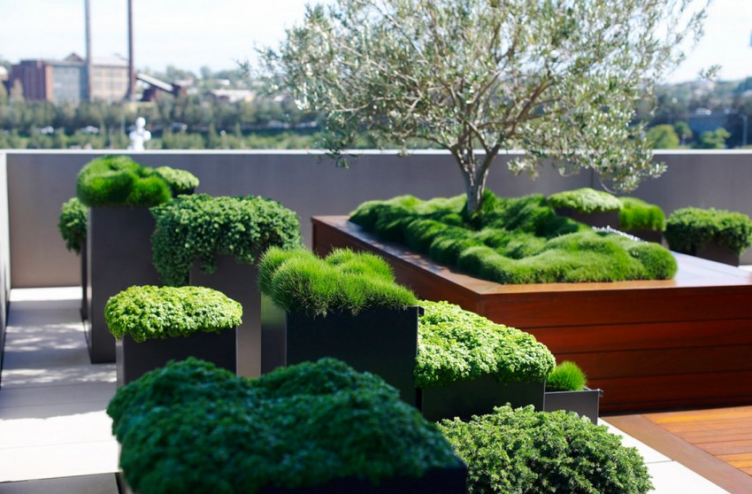 Greenery in modern patio planters