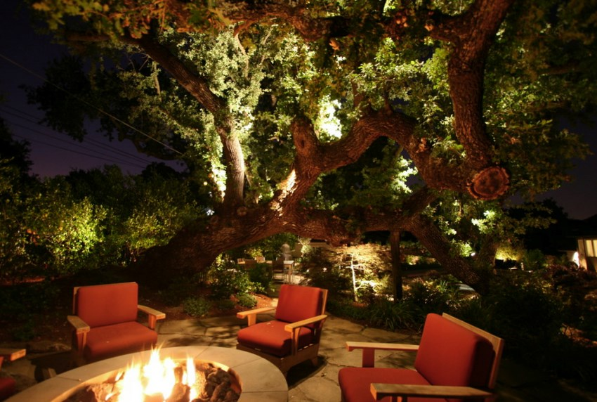 Illuminated oak tree by an outdoor fire pit