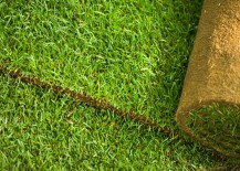 Installing sod is another option for rejuvenating the yard
