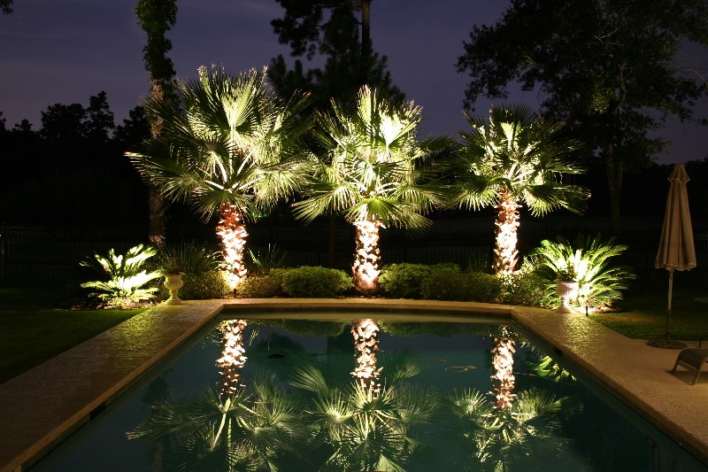 Landscaping lighting on poolside palm trees