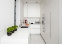 Minimal modern kitchen in white with a potted herbs