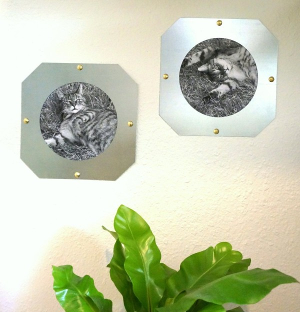 Pet photos in DIY industrial frames