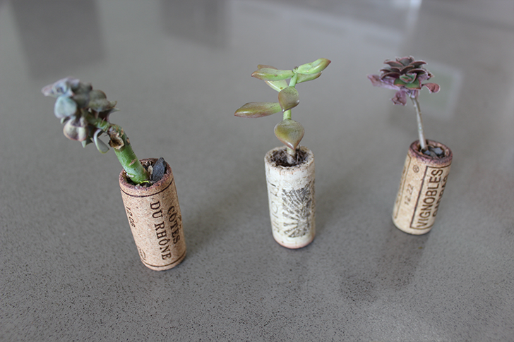 Planters made out of wine corks