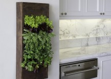 Small herb garden in the kitchen also doubles as an aesthetic addition
