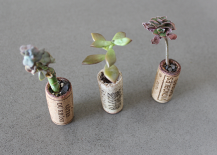 Succulents planted in wine corks