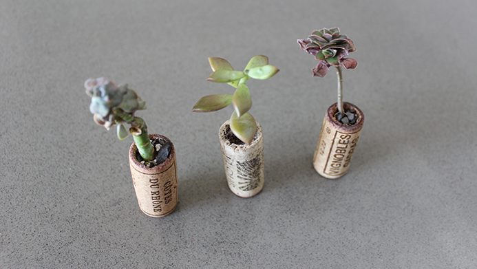 Succulents planted in wine corks DIY: How to Make Adorable Recycled Wine Cork Planters for Under $10