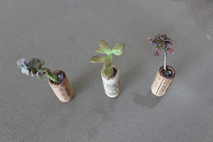 Wine Cork Succulent Planter