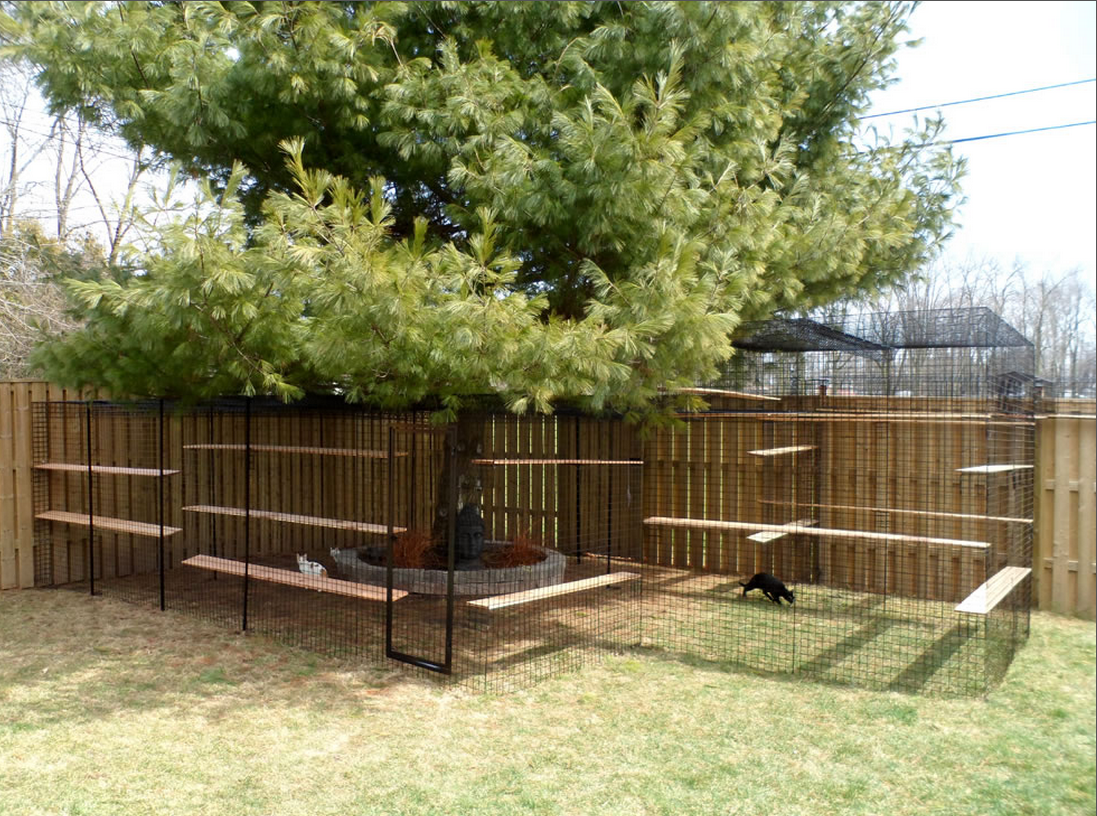 Zen Outdoor Cat Enclosure in Backyard
