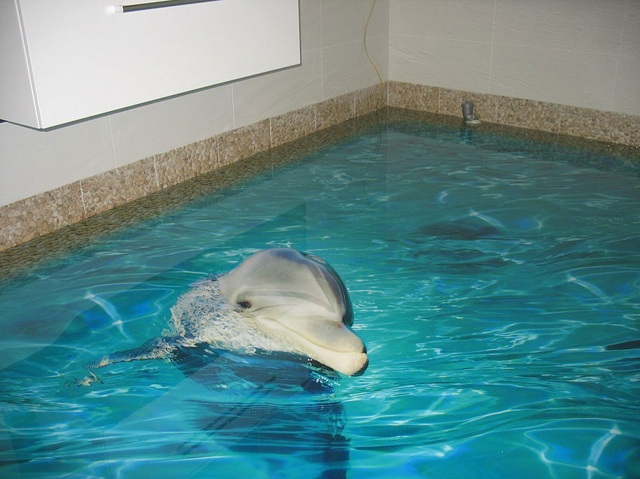 Dolphin head out of water flooring