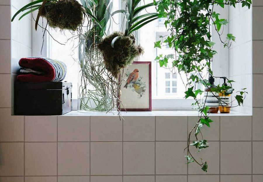 Ingenious way of decorating the bathroom with hanging plants