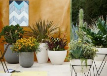 Photos from West Elm 217x155 The Art of Growing Garden Plants in Containers