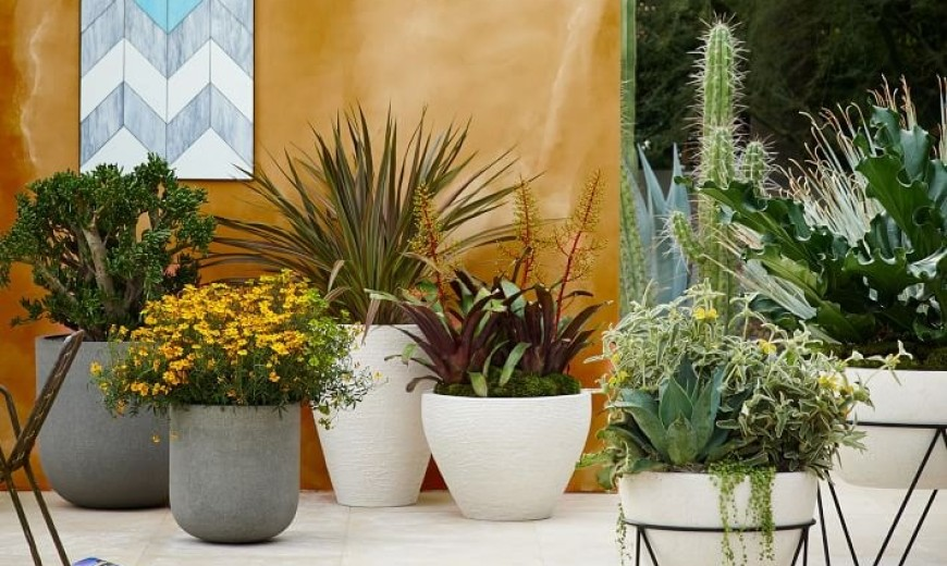 The Art of Growing Garden Plants in Containers
