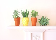 Pineapple planter from Lines Across