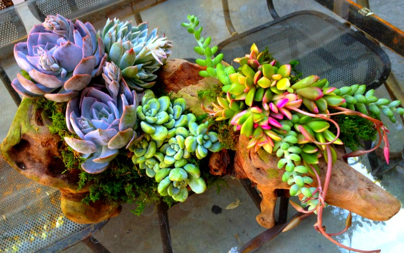 Small planters can have a big impact when unusual