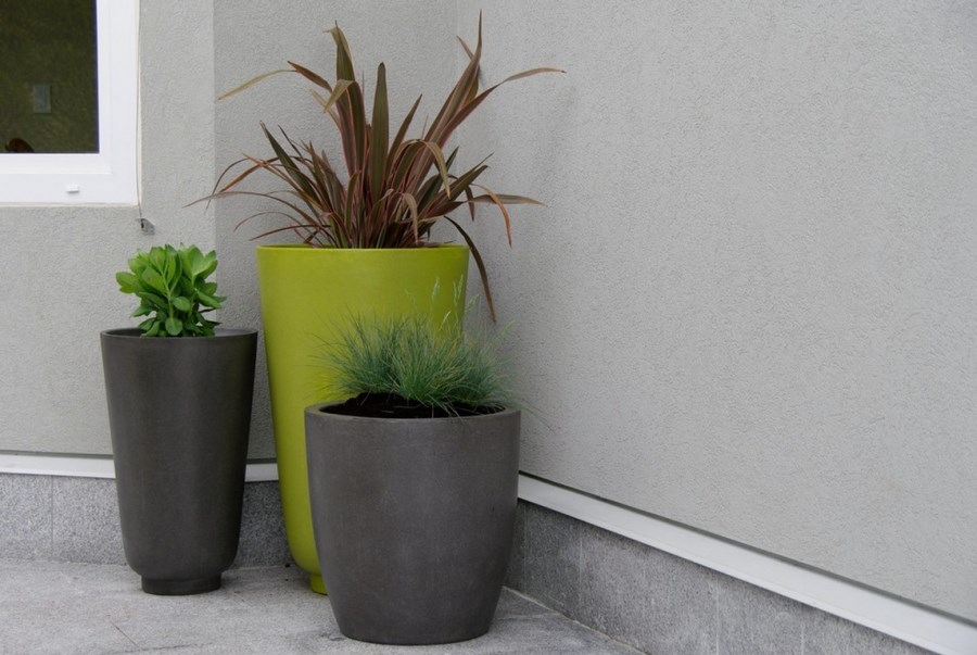 Striking grouping of container plants