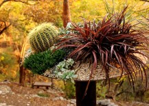 Succulents-grasses-and-cacti-in-a-planter-by-Big-Red-Sun-217x155