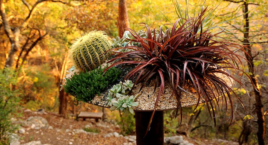 Succulents, grasses and cacti in a planter by Big Red Sun