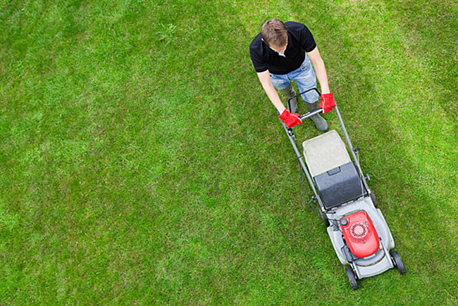 To mow or not to mow (your own lawn)