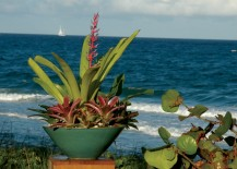 Tropical-container-garden-in-a-beachside-setting-217x155