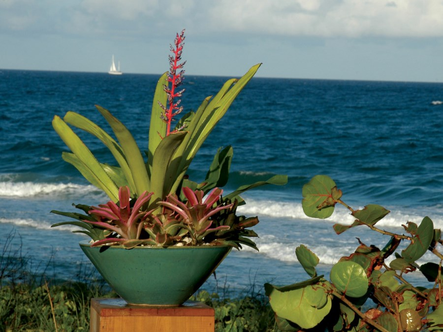 Tropical container garden in a beachside setting