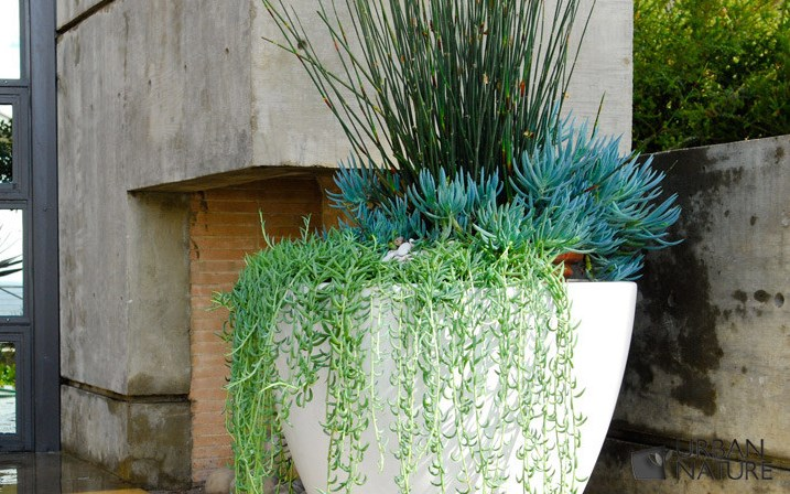 Vary the height of the plants in your container garden