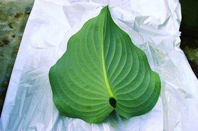 birdbath leaf 2